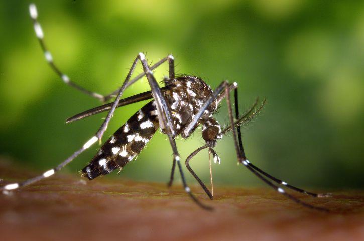 Sok a szúnyog